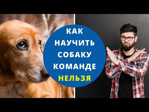 Как научить собаку команде нельзя видео уроки