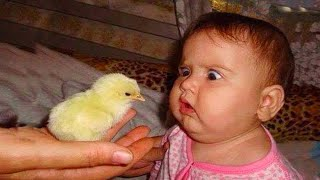 Funny And Cute Baby Moments : 1001 Funny Baby Reaction When Play With Chicken | Funny Videos