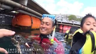 2017年春のルネッサンスリゾートオキナワ滞在時に参加したウミガメと泳...