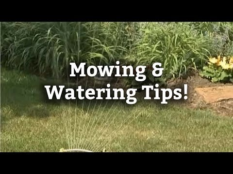 How to Mow & Water a Lawn — Lawn Care Tips & Techniques