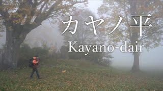 【風景写真】紅葉と霧に包まれたカヤノ平の撮影Vlog|NikonZ7