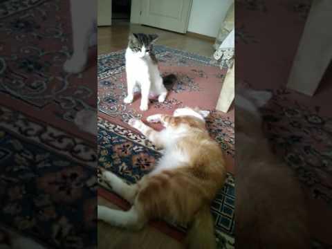 Kedi Alerjisi Olan Kedi