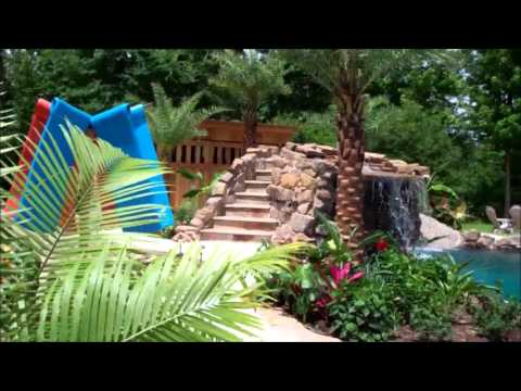 Palm Trees For Pools Dallas Austin San Antonio Tx Texas