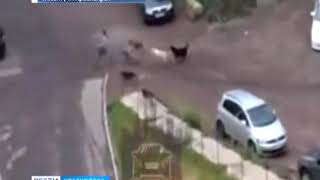 В Красноярске на девушку напала стая бродячих собак