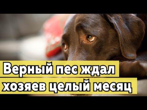 Верный пес ждал хозяев целый месяц