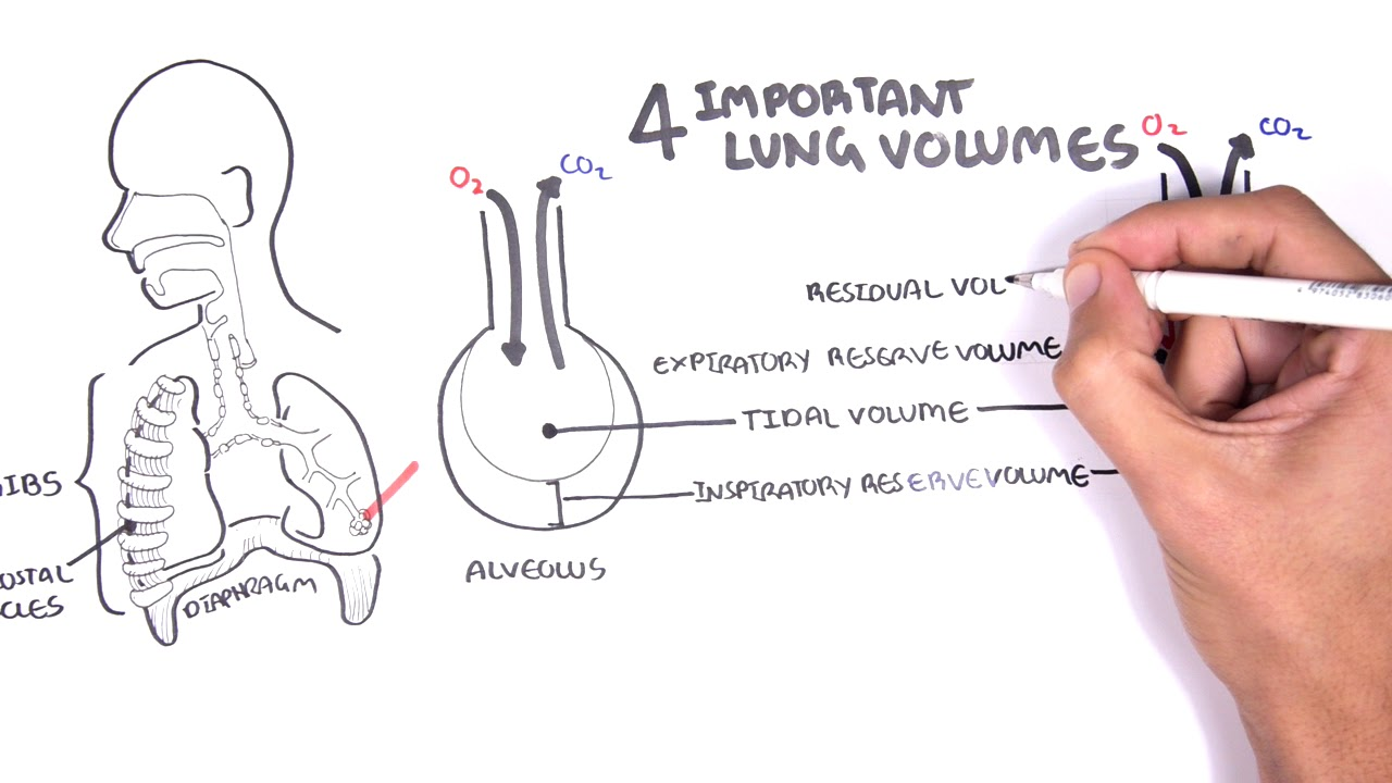 Lung Function Lung Volumes And Capacities Youtube