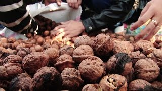 吉尔吉斯斯坦:核桃改善农民收入