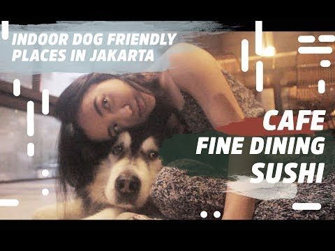 BEST INDOOR DOG FRIENDLY PLACES IN JAKARTA