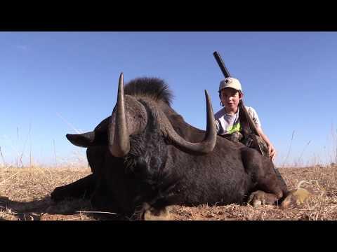 Black Wildebeest Hunt | Gateway To Africa Safaris
