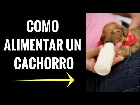 Aprende Como Alimentar A Un Cachorro en 3 Simples Pasos- How to feed a puppy - Jose Arca