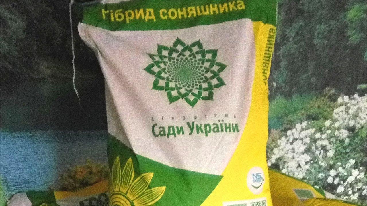 Семена подсолнечника Ново – Алье. Проверка на всхожесть - YouTube