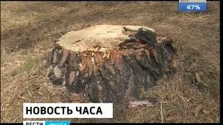 Объёмы незаконных рубок леса в этом году подсчитали в Иркутской области