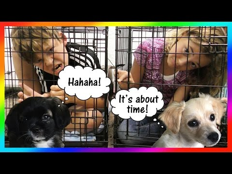 KIDS GO TO DOGGY JAIL! | We Are The Davises