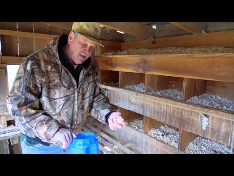 Day on the Farm - Egg Laying Breeds & Protection