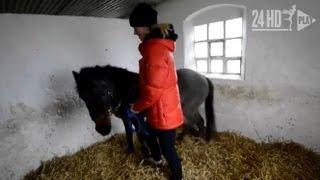 En av Sveriges äldsta hästar i Ängelholm