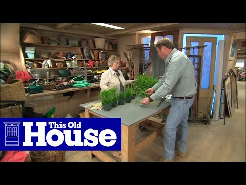 How to Choose Grass Seed - This Old House
