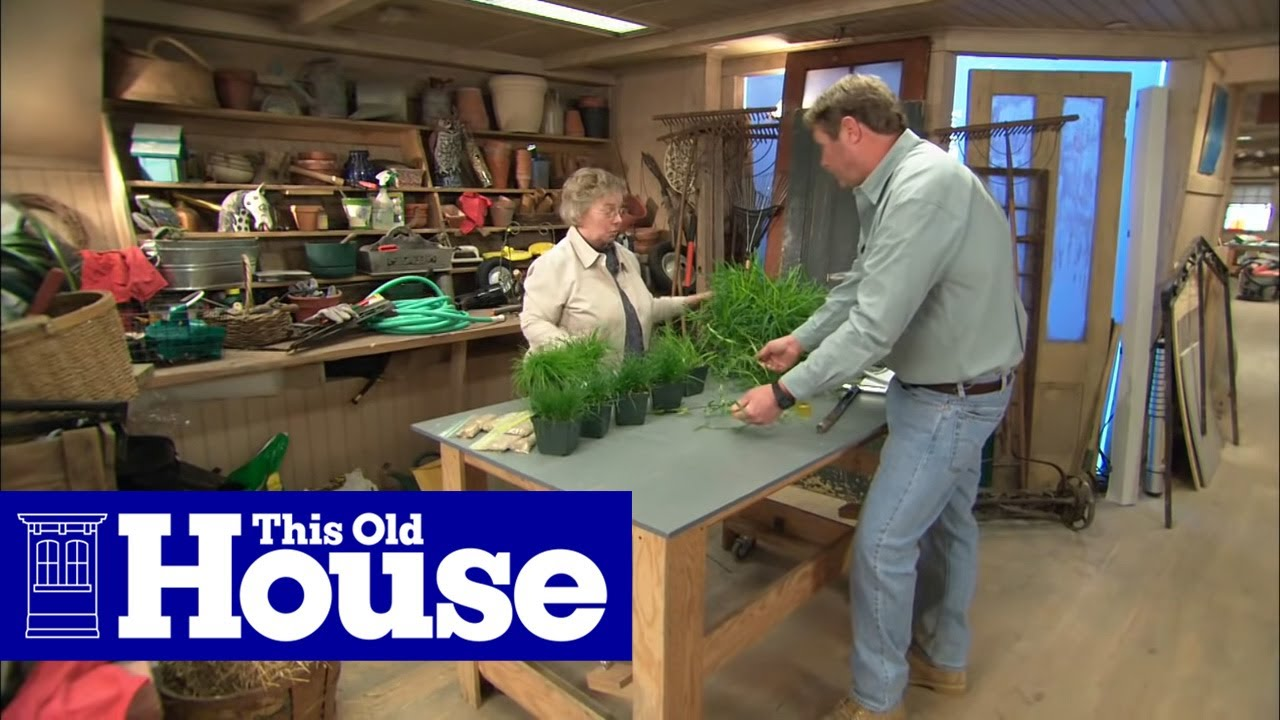 How To Choose Gr Seed This Old House You