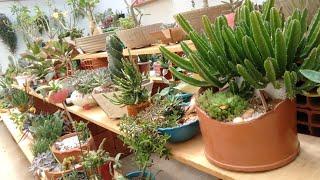 10 Suculentas De Crescimento Rápido Que São Fáceis De Cultivar