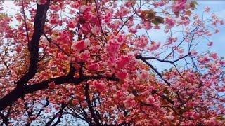 Tokyo marunouchi park 東京駅 和田倉噴水公園  kidsTV Japan