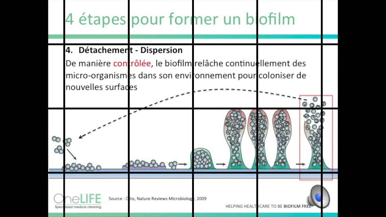 Les enjeux du biofilm en milieu hospitalier