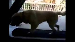 Funny Dogs doing crazy things