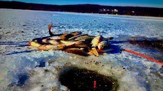 Зимняя рыбалка в 20 Лед трещит Рыбу нашли