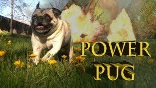 Power Pug