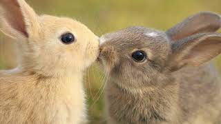 Разнообразие животных со всей планеты