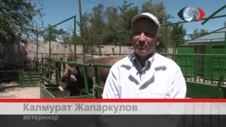Животноводство Кыргызстана