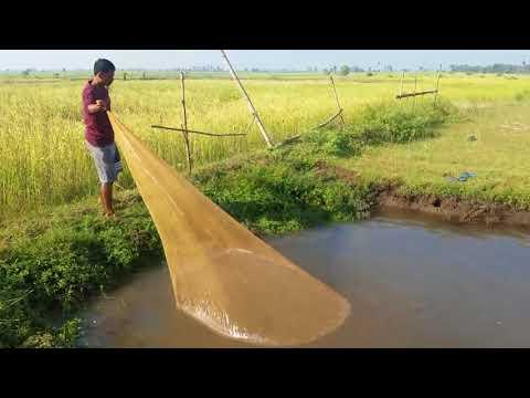 Survival Skills Primitive Traditional fishing video in cambodia 2017 | Amazing cast net fishing big