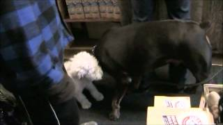 Mellow Vibes Dog Training - The Training Of Guss [part 1]