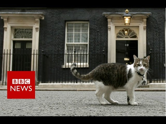 Downing Street cat gets a helping hand – BBC News