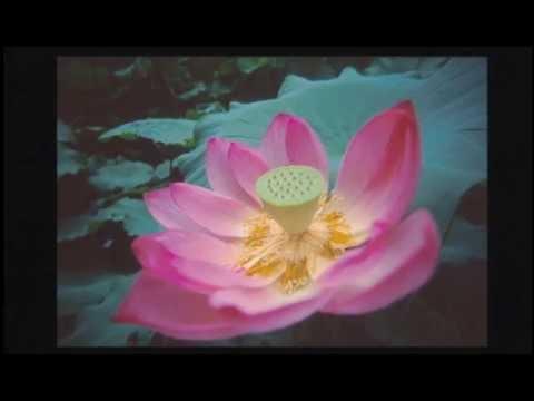 Kitaro - Daylight Moonlight Live in Yakushiji - Heaven and Earth Live