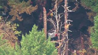 SkyKING flies over Ketron Island where stolen plane crashed
