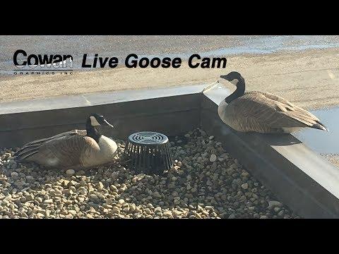 Cowan Graphics Inc Live Stream