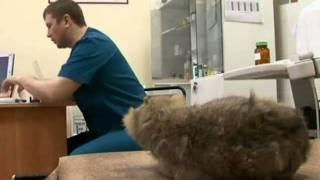 Зверская жизнь.Чем нельзя лечить животных?