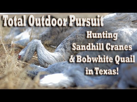 Hunting Sandhill Cranes & Bobwhite Quail in Texas with Longn