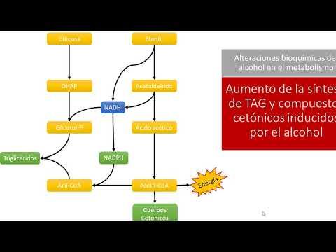 Bioquímica Clínica: Metabolismo del alcohol - YouTube