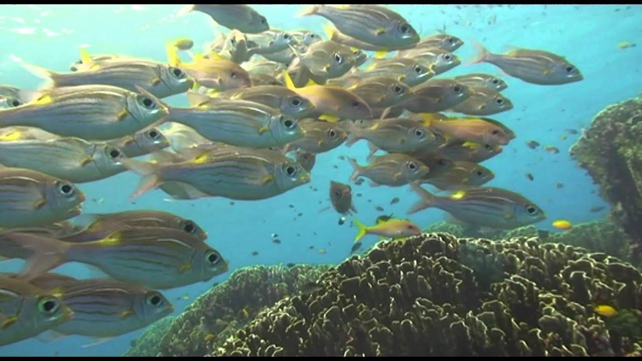 glimpse of marine life andaman sea youtube
