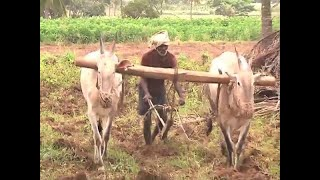 Rajasthan: Farmers Trapped In The Web Of Loan Waiver   Samvidh…
