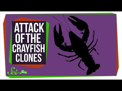How An Army Of Crayfish Clones Took Over Europe