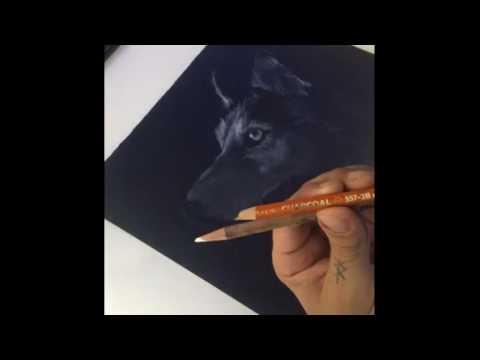 Husky Dog Drawing time lapse