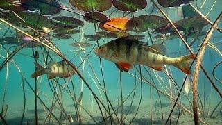 Рыбалка в Подмосковье  часть 1.Рыбалка летом в Подмосковье.