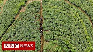 From tea fields to university in Sri Lanka - BBC News
