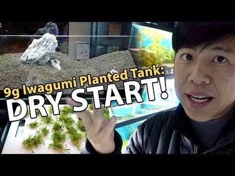 Iwagumi Planted Tank (Dry Start Method) / Dwarf Baby Tears vs. Monte Carlo