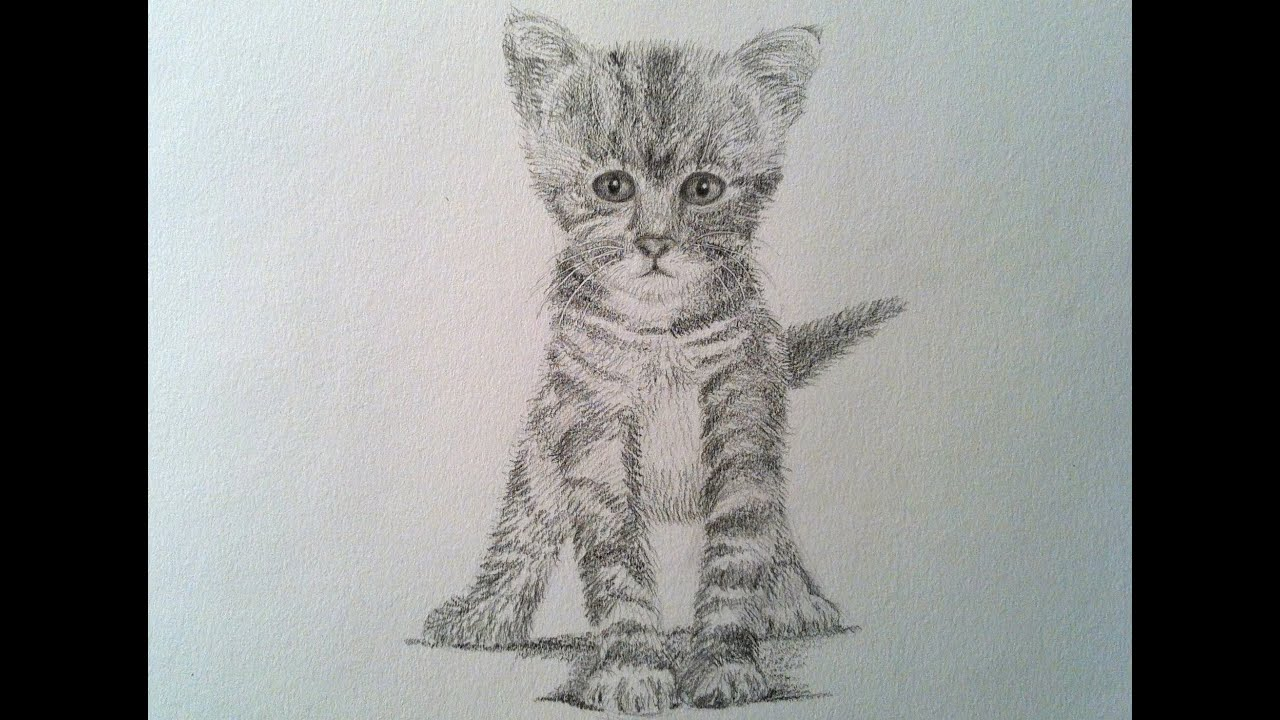 How To Draw A Realistic Cat Drawing A Kitty Cat Youtube