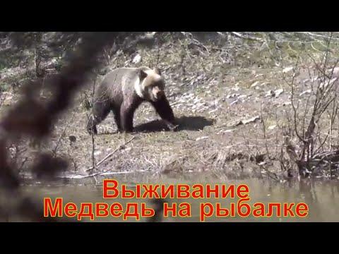Выживание Медведь на Рыбалке  Сибирь, Тайга, Поход  Охота Лес Таймень Счастливые люди Хариус Ночевка