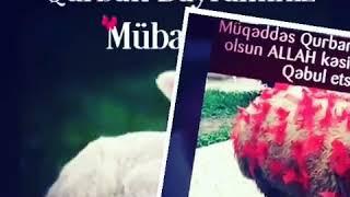 Qurban bayramına aid video