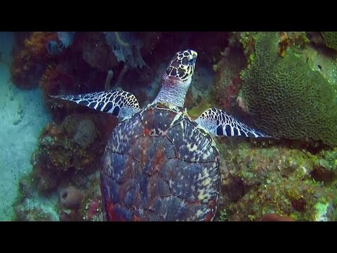 Roatan Scuba Diving In 3D- An Underwater 3D Channel Film