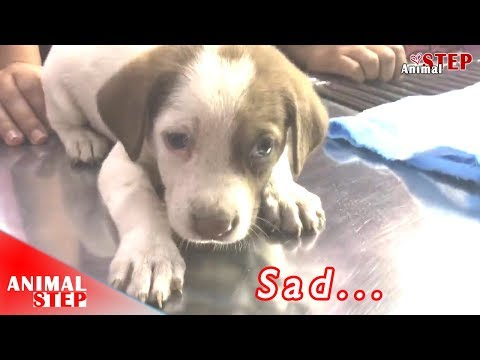 Wounded Stray Puppy THANKS Everyone that Saved Her Life